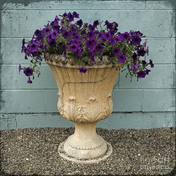 Photograph - Potted Petunias by Patricia Strand
