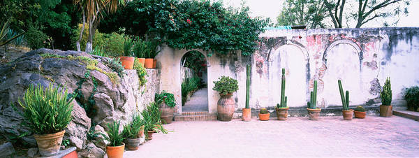 San Miguel De Allende Photograph - Potted Plants In Courtyard Of A House by Panoramic Images
