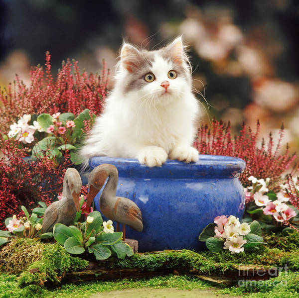 Photograph - Potted Puss by Warren Photographic