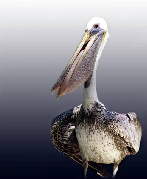Wildbird Photograph - Pouches by Skip Willits