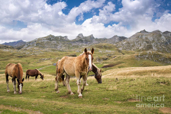 Pyrenees Photograph - Pourtalet Pass by Delphimages Photo Creations
