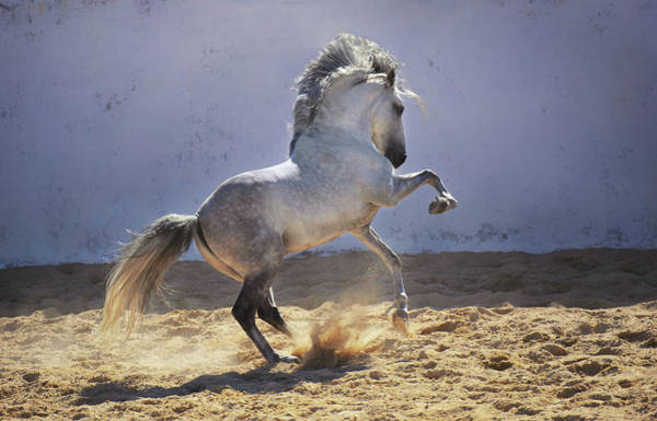 Photograph - Power In Motion by Ekaterina Druz