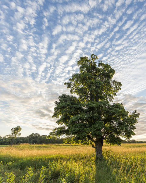Upstate Photograph - Power Of A Tree by Everet Regal