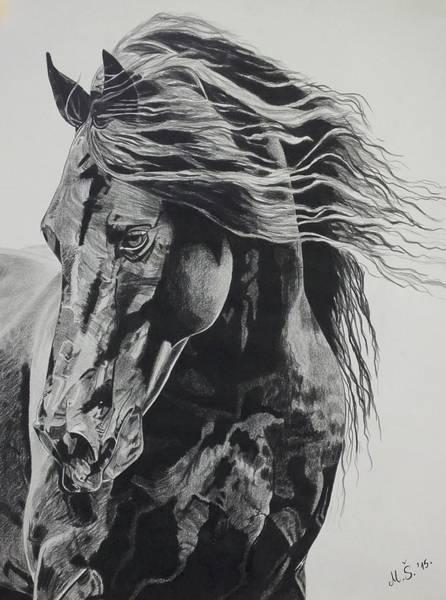 Friesian Drawing - Power Of Horse by Melita Safran