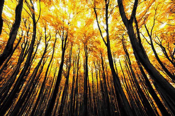 Photograph - Power Of The Sun by Radek Spanninger