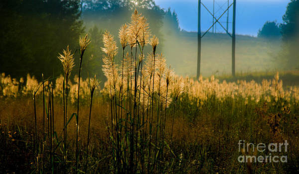 Photograph - Powerline Sunrise by James Hennis