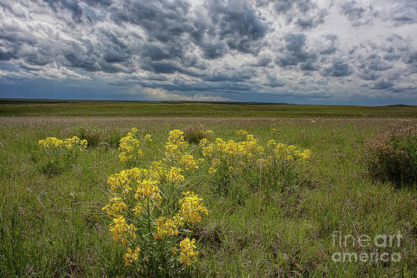 Photograph - Prairie Bouquet by Jim Garrison