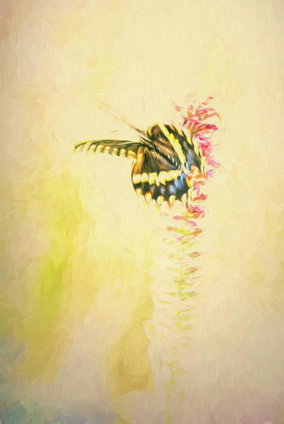 Photograph - Prairie Butterfly 3 by Patricia Cale