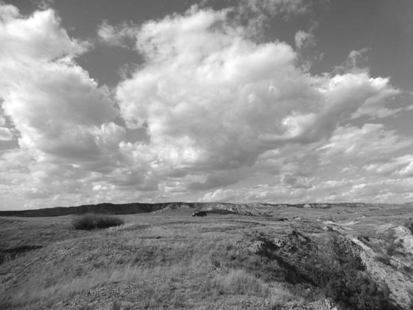 Photograph - Prairie Exploration by Cris Fulton