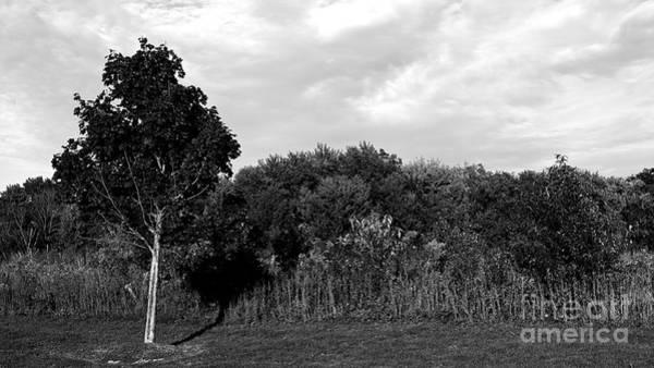 Photograph - Prairie by Frank J Casella