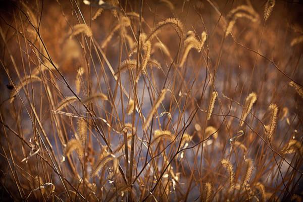 Tallgrass Wall Art - Photograph - Prairie Grass Blades by Steve Gadomski