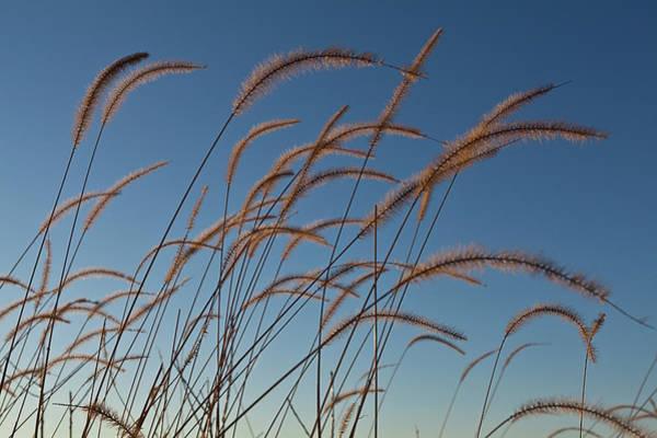 Tallgrass Wall Art - Photograph - Prairie Grass Landscape by Steve Gadomski