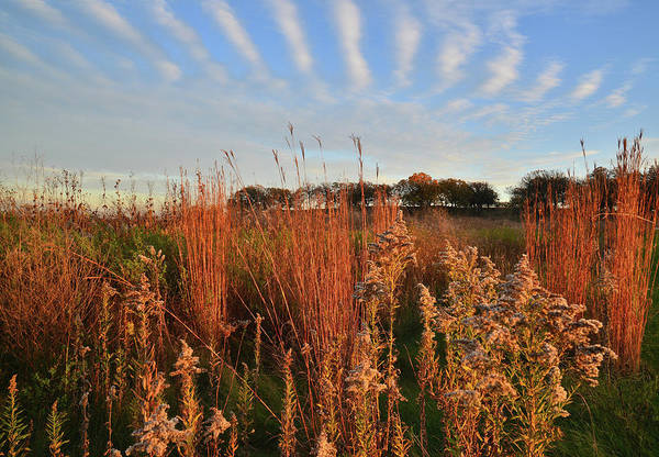 Photograph - Prairie Grasses And Wildflowers At Sunset In Glacial Park by Ray Mathis