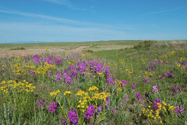 Photograph - Prairie In Bloom by Cascade Colors