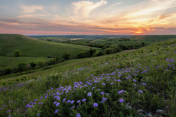Location Photograph - Prairie In Bloom by Scott Bean