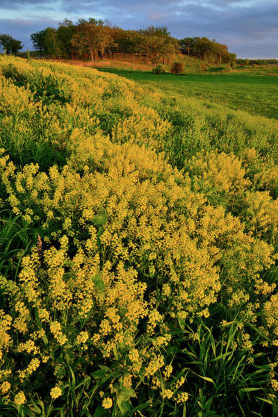 Photograph - Prairie Of Wildflowers At Glacial Park by Ray Mathis