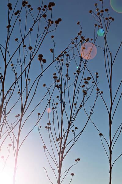 Tallgrass Wall Art - Photograph - Prairie Plants by Steve Gadomski