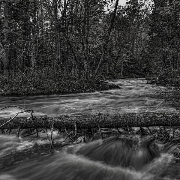 Photograph - Prairie River Crossing Log Square Format by Dale Kauzlaric