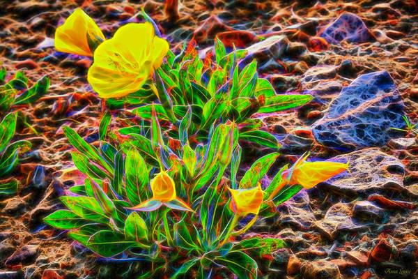 Photograph - Prairie Rose Glow by Anna Louise