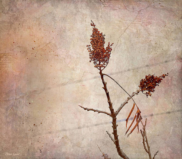 Photograph - Prairie Seed Pods by Anna Louise