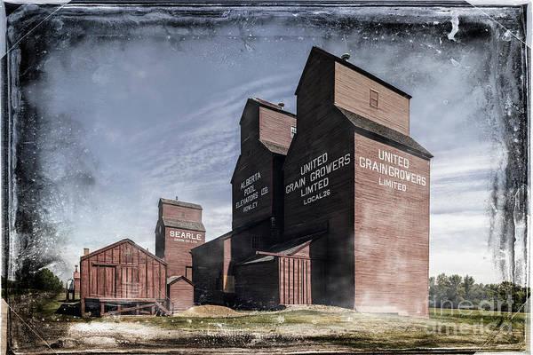Photograph - Prairie Sentinels II by Brad Allen Fine Art