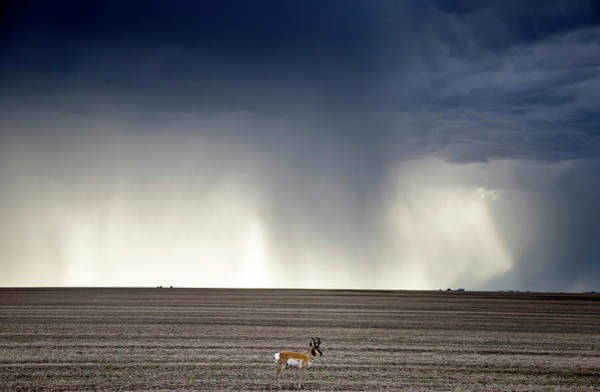 Wall Art - Photograph - Prairie Storm Clouds Antelope by Mark Duffy