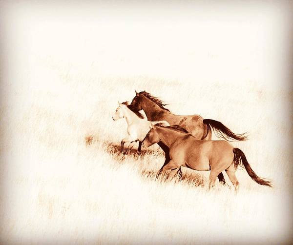 Photograph - Prairie Wild  by Amanda Smith