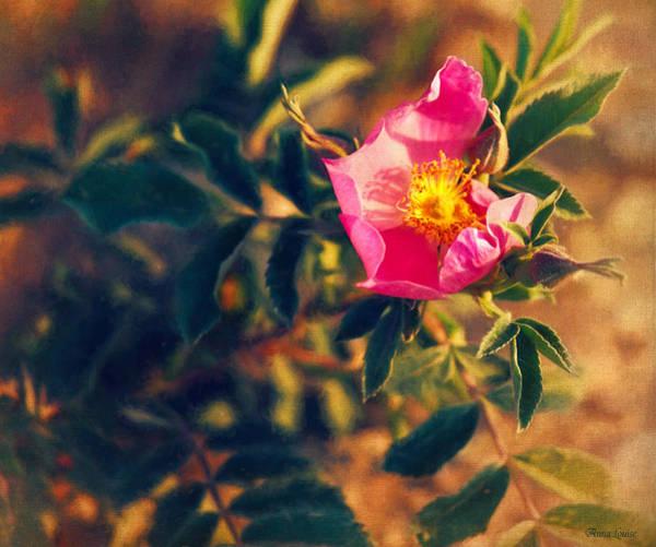 Photograph - Prairie Wild Rose by Anna Louise