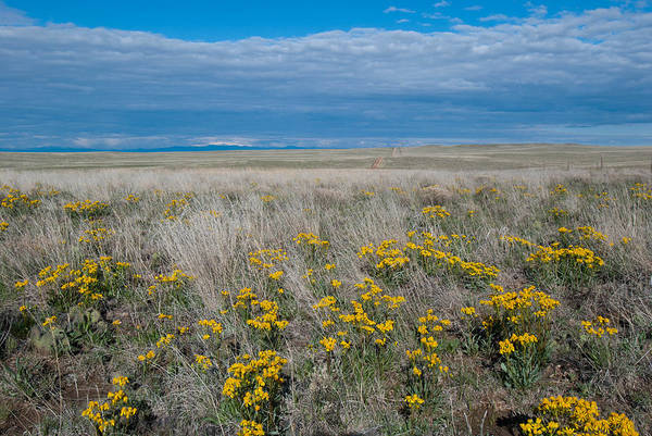 Photograph - Prairie Wildflower And Sky Landscape by Cascade Colors