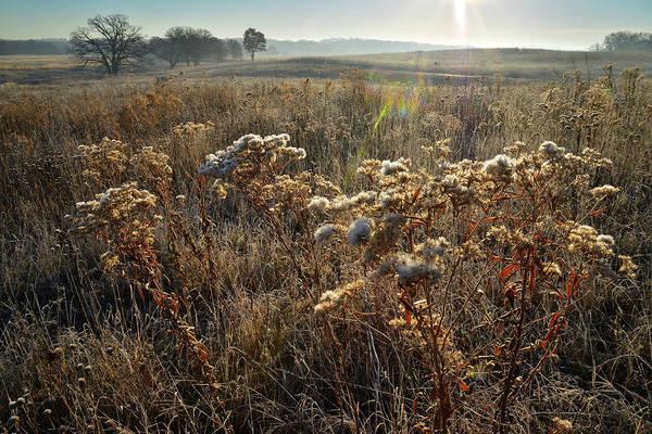 Photograph - Prairieview Fall Prairie Wildflowers by Ray Mathis