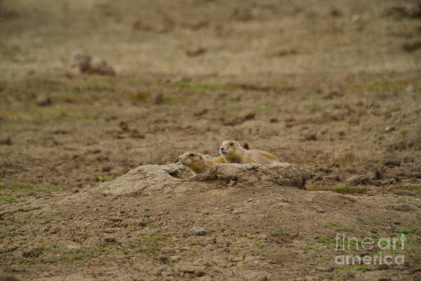 Wall Art - Photograph - Prairie Dogs Close To The Hole by Jeff Swan