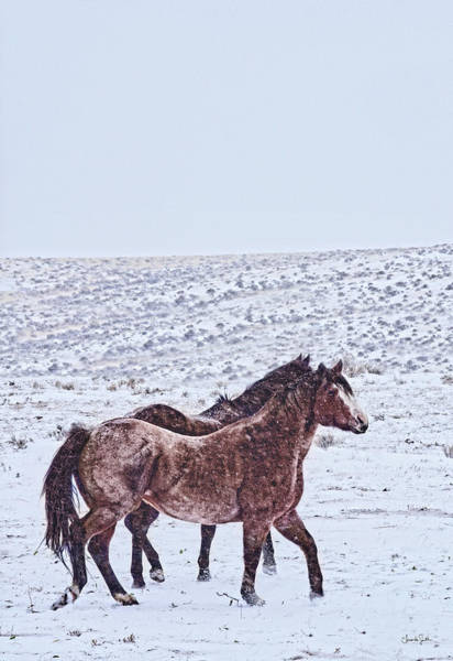Photograph - Prancing In The Snow by Amanda Smith