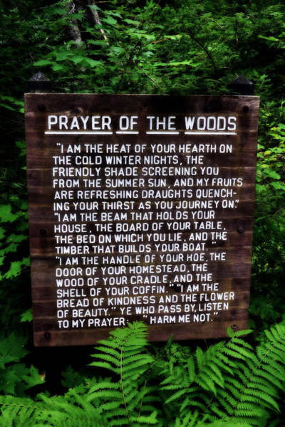 Inspirational Quote Photograph - Prayer Of The Woods by Michelle Calkins