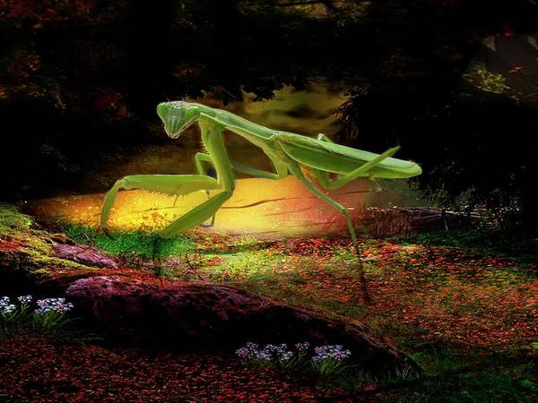 Digital Art - Praying Mantis by Rusty R Smith