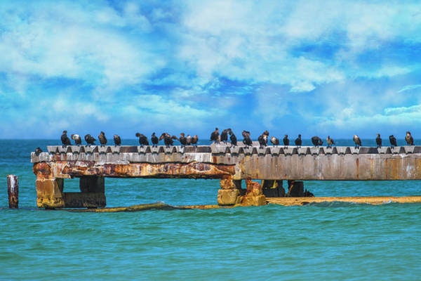 Double Crested Cormorant Photograph - Preaching To The Choir You Need A Vacation by Betsy Knapp