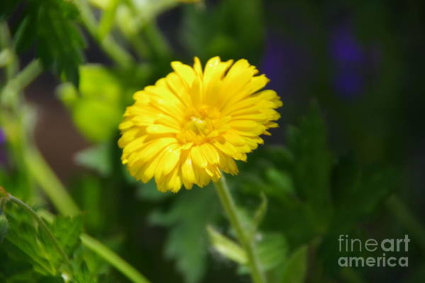 Wall Art - Photograph - Precious Little Big Things by Jeff Swan