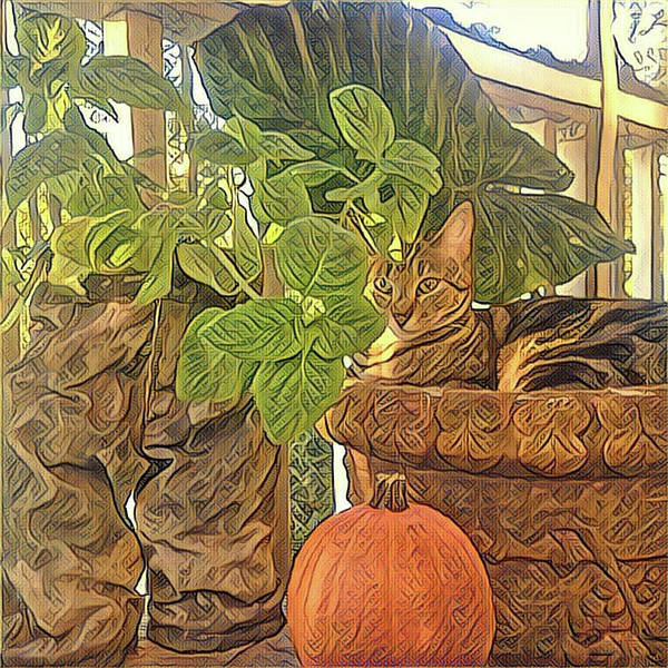 Photograph - Precious Pumpkin by Sherry Kuhlkin
