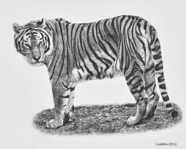 Digital Art - Predator Portrait by Larry Linton