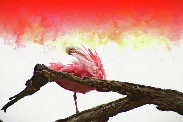 Photograph - Preening Colors by Alice Gipson