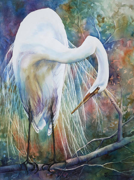 Egrets Wall Art - Painting - Preening Egret by Sue Zimmermann