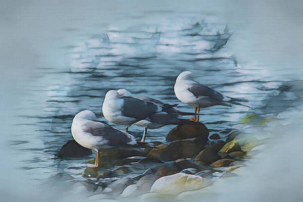 Digital Art - Preening Gulls by Richard Farrington