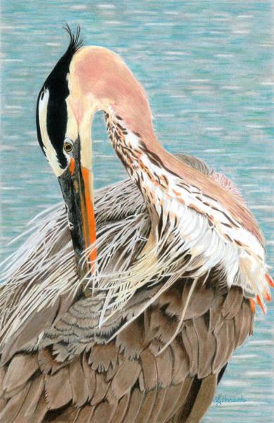 Great Blue Heron Drawing - Preening by Jodi Harsch