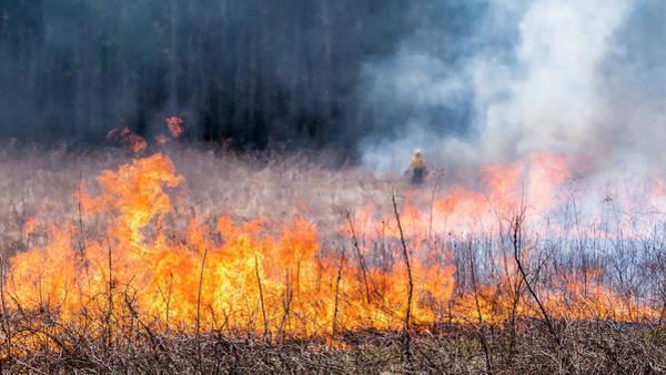 Photograph - Prescribed Burn - Uw Arboretum - Madison - Wisconsin by Steven Ralser