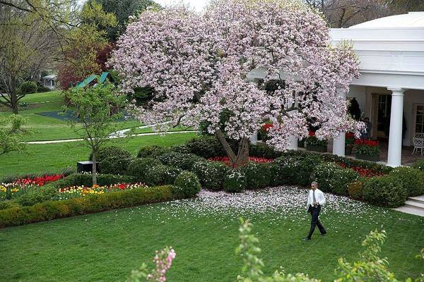 Wall Art - Painting - President Barack Obama  And Spring In The Rose Garden Of The White House by Celestial Images
