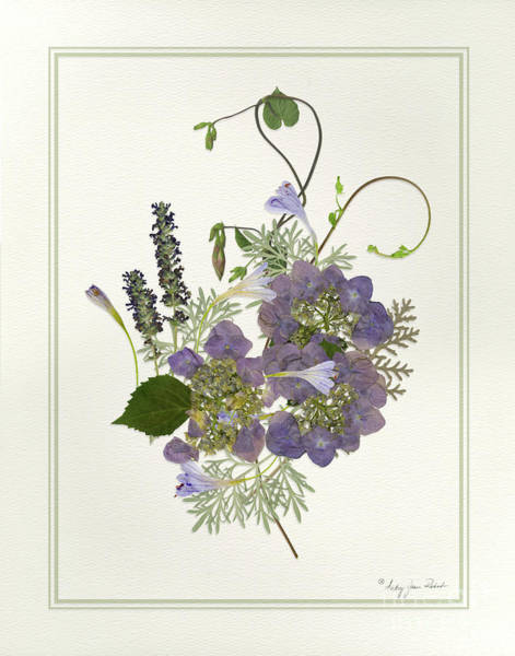 Painting - Pressed Dried Flower Painting - Blue Hydrangeas Morning Glory Lavender Ferns by Audrey Jeanne Roberts