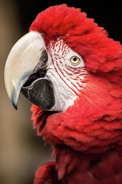 Photograph - Pretty Bird, Pretty Bird by Don Johnson