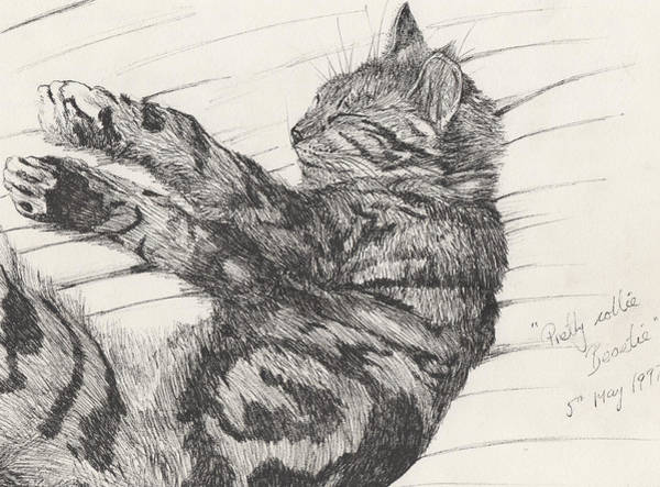 Kitten Drawing - Pretty Collie Beastie by Vincent Alexander Booth