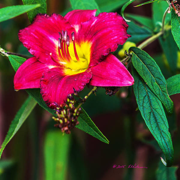 Photograph - Pretty Flower by Edward Peterson