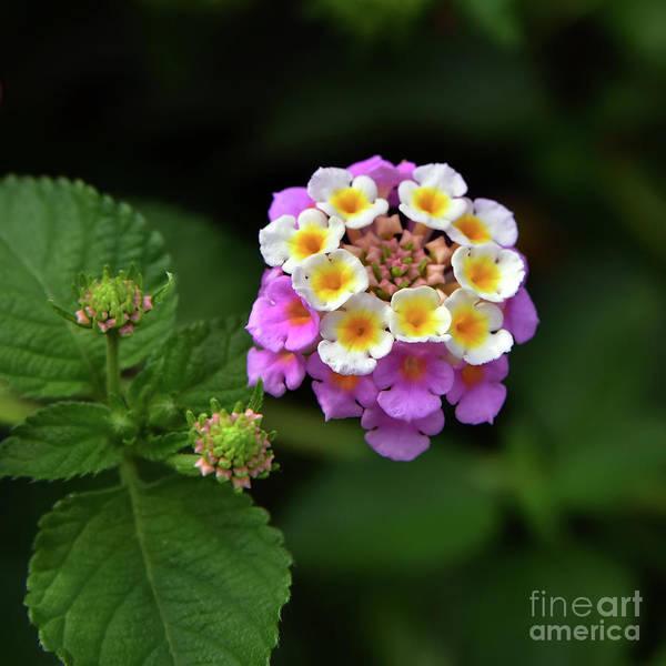 Wall Art - Photograph - Pretty Flower by Svetlana Sewell