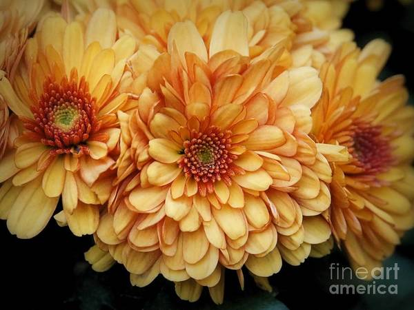 Photograph - Pretty Golden Mums by Patricia Strand